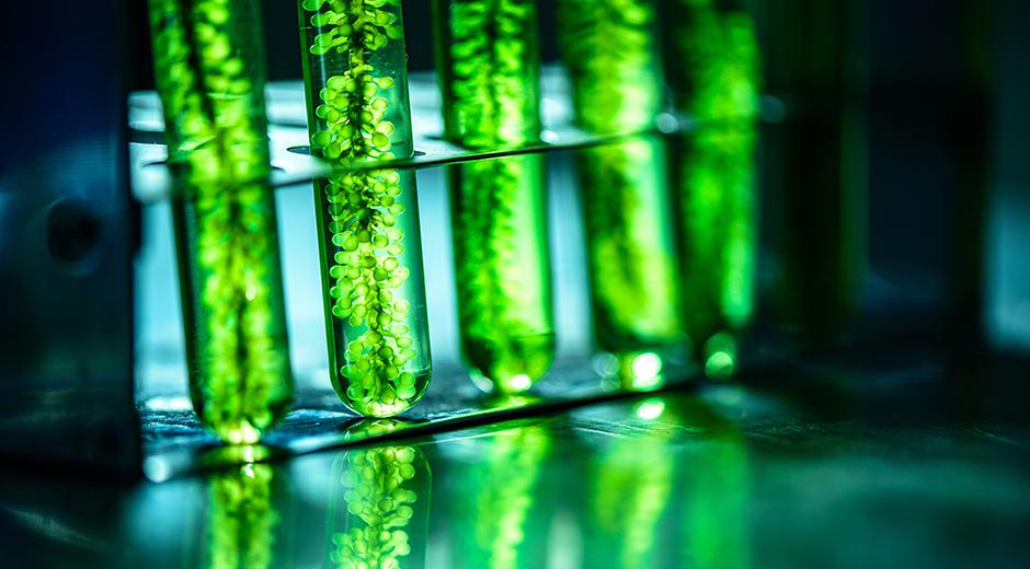 Food Meet Up: Mikroalger - den nye superfødevare?
